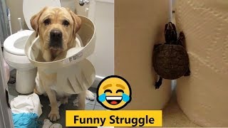 Funny Struggle 😂 Funny and Cute Animals Video Compilation