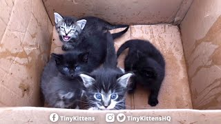 LIVE:  Tiny kittens rescued from the trash – TinyKittens.com