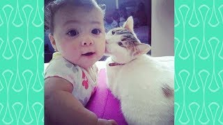 Funny Babies and Cats moments –  Baby and Cat fun and Fails Videos