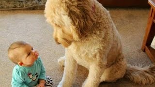 FUN CHALLENGE: Try NOT to laugh – Funny & cute dogs and kids