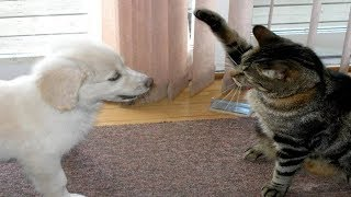 Funny Cats And Dogs – Funny Cats vs Dogs July 2017