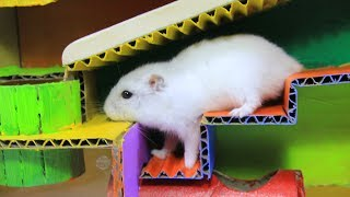 Funny Hamsters Running In Tank Maze Race- DIY Hamster