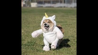Funny Cute Dogs in Costumes