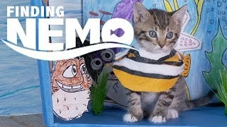 Disney Pixar's Finding Nemo (Cute Kitten Version)