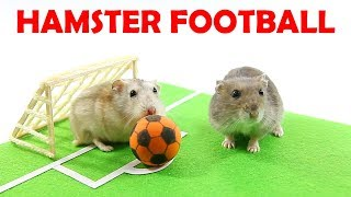 Three Hamsters Playing Football – Mochi Toto Or Chip Who Will Win In This Challenge?