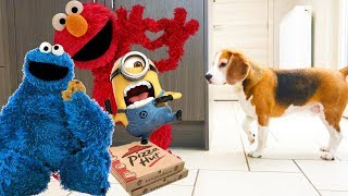 Cute Dogs get Surprised Compilation  : Funny Dogs Louie & Marie The Beagles