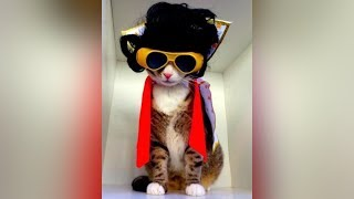 CATS TRY ON HALLOWEEN COSTUMES – Funny Cats in Costumes Compilation
