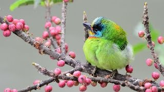 Awesome & Beautiful Birds Pictures In The Nature HD