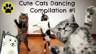 Cute Cats Dancing Compilation Episode 1 – Lazy Hooks