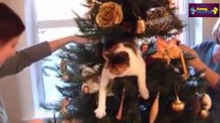 Funny videos – cute cats and dogs love christmas