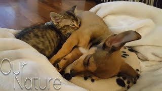Puppies Meeting Kittens For The Very First Time Compilation 2018 (BEST FUNNY ANIMAL COMPILATION)