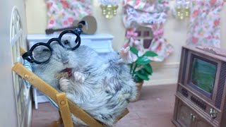 Cute hamster watching TV – Funny videos of hamsters