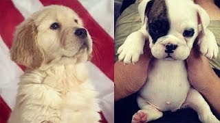 Cutest Dogs And Puppies In The World – Cutest Dogs Of The World #15 – Puppies TV