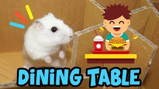 Cute Hamsters Join In Dining Table Maze And Discover The Universe