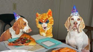 Evil Cat Ruins Dog Party! Funny Dogs Maymo, Penny & Potpie