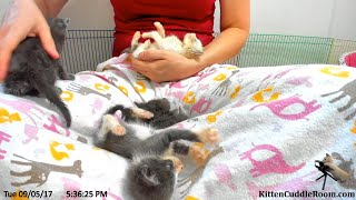 Foster Mom Sarah  Weighs the Kittens, discusses cat food new Play center is set up