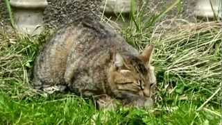 Mother cat finds her kittens dead (and rescues the last one)