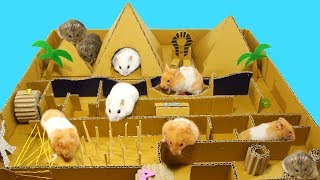 DIY Pyramid Race From Cardboard For Many Cute Hamsters