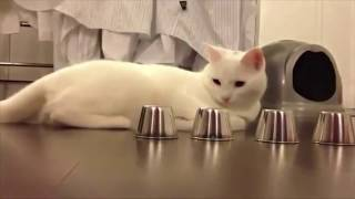 Funny cats doing stupid things- FUNNY CATS COMPILATIONS-  funny animals compilation