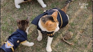 Cute Cats Living At A Police Station In Busan | Kritter Klub