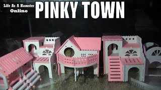 Squishy And Sqwerty  Dwarf Hamsters Running Around Pinky Town 1