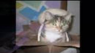 Cat Compilation/Epic Funny Cats / Cute Cats Compilation