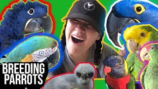 COMING CLEAN!! BREEDING PARROTS? BIRD MATCHMAKING!