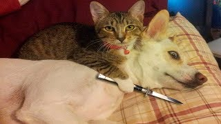 ♥ cute dogs vs cute cats ♥ #2019