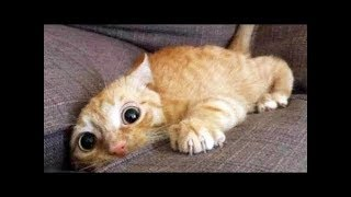 Top 200 Highlights of Animals – VERY FUNNY ANIMALS