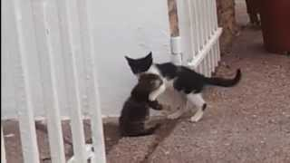 Cute Cats kissing and hugging
