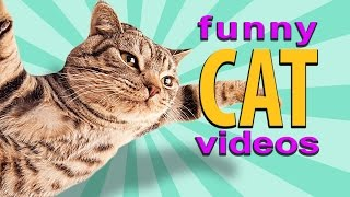 Funny Cat Videos – Flying Cat, Treadmill Cats, Cute Kittens