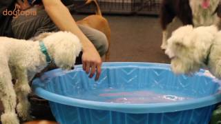Cute dogs and puppies play at indoor daycare in Mississauga