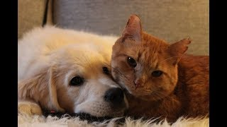 Friend or Foe –  Cute Friendship between Cat and Dog Videos Compilation