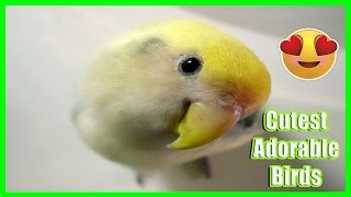 10 Cutest Adorable Birds