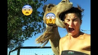 Funny birds Steal Fails | Try Not To Laugh | Birds Steals Stuff | Top Funny Compilation