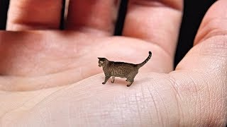 World's Smallest Cat – Cute, Tiny and Mean