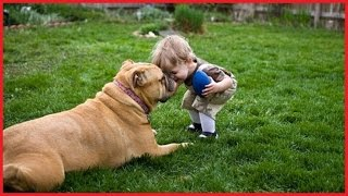 Dogs and Babies – cute dogs playing with baby
