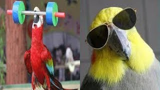 TRY NOT TO LOUGH FUNNY PARROTS VIDEOS COMPILATION