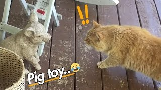 EPIC LAUGH Funniest Scared Cat Home 2018 Best of Funny cat Videos.#1