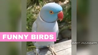 Funny Birds Compilation (2019) #2 | Cute Parrots Healing my Soul