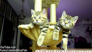 Funny Cats watching Women's tennis | Too Cute Kittens