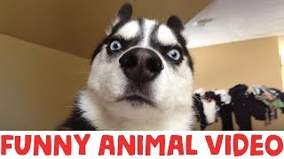 (IMPOSSIBLE) TRY NOT TO LAUGH – FUNNY ANIMAL COMPILATION