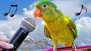 Funny Birds Imitate iPhone Gun Alarm Cat Dog – Cute Baby Parrot Bird Videos – Singing Parrots Video