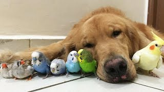 Funny Birds Annoying Dogs 2018 – Cute Dog Videos