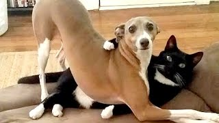 After this YOU'll WISH TO HAVE A DOG – Funny DOG compilation