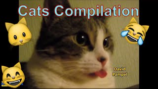 Funny Cats Compilation 2016 // Cute Cats Videos 2016 // Funny little kittens // HD 2016 David Pampel