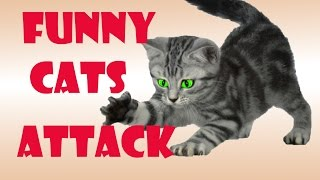 Funny cat video – Funny Cats Attack