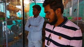 Budgies Parrot || One Of My Subscriber Visit Budgies Setup || Birds in Nagpur || Exotic Birds
