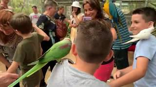 Funny Birds Attacking People: Aviary Tours at Maleny Botanic Gardens & Bird World