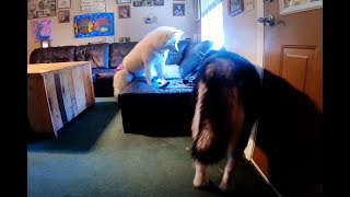 Funny Dogs | Surveillance Video